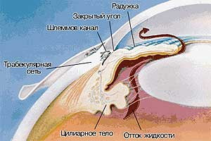 ГЛАУКОМА - строение закрытого угла передней камеры глаза